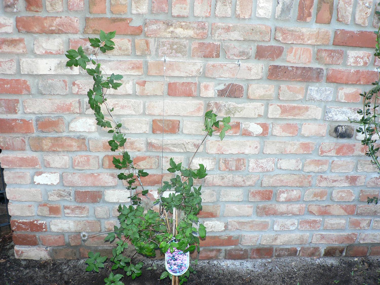 mauer mit bepflanzung